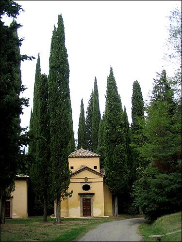 Zypressen in San Vivaldo, Toskana