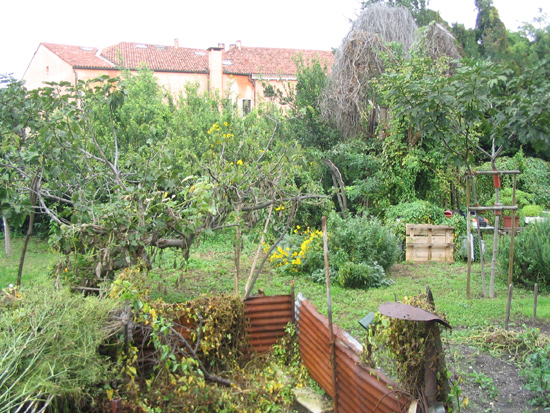 Verwilderter Nutzgarten auf Giudecca