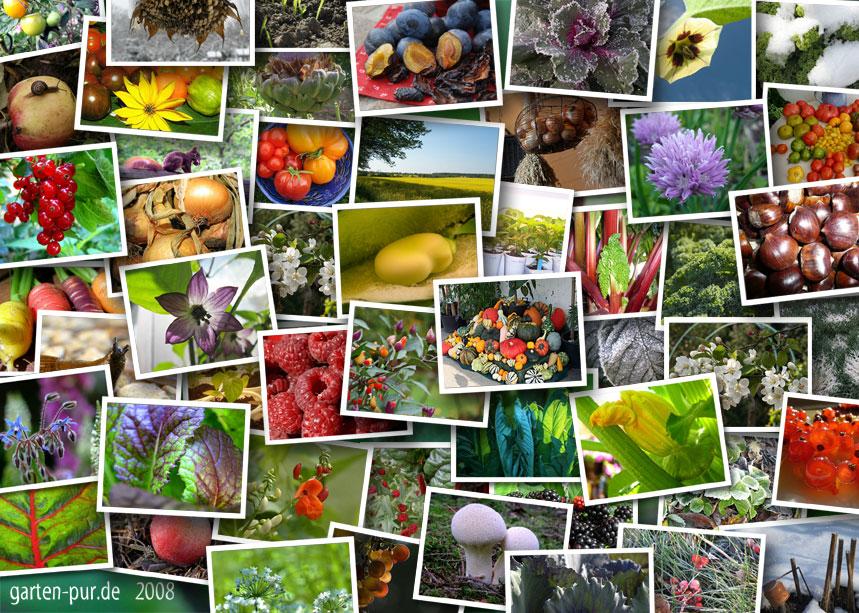 Gemüsekalender 2008