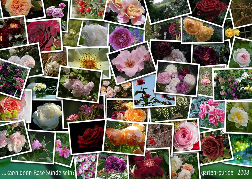 Rosenkalender 2008