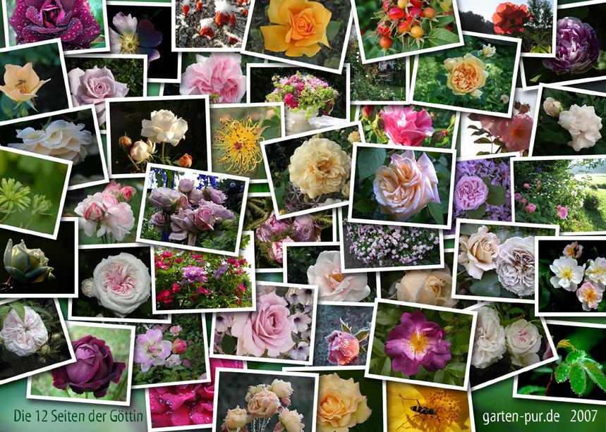Rosenkalender 2007