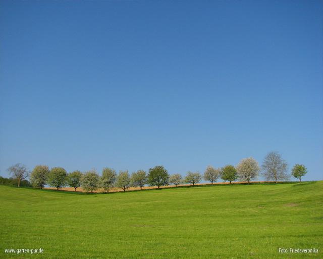 Wallpaper Landschaft Vorschau