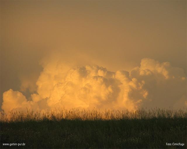 Wallpaper Wolken Vorschau