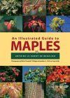 Illustrated Guide to Maples