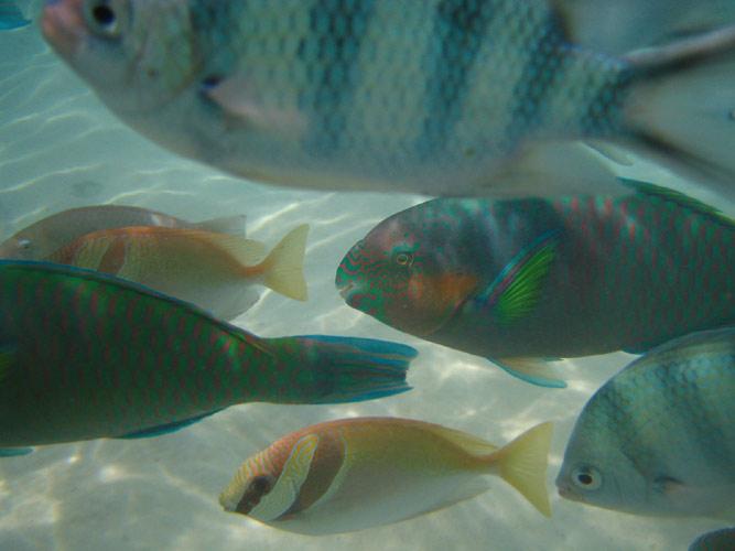 Fische unter Wasser - Makro mit Diigital Ixus 40