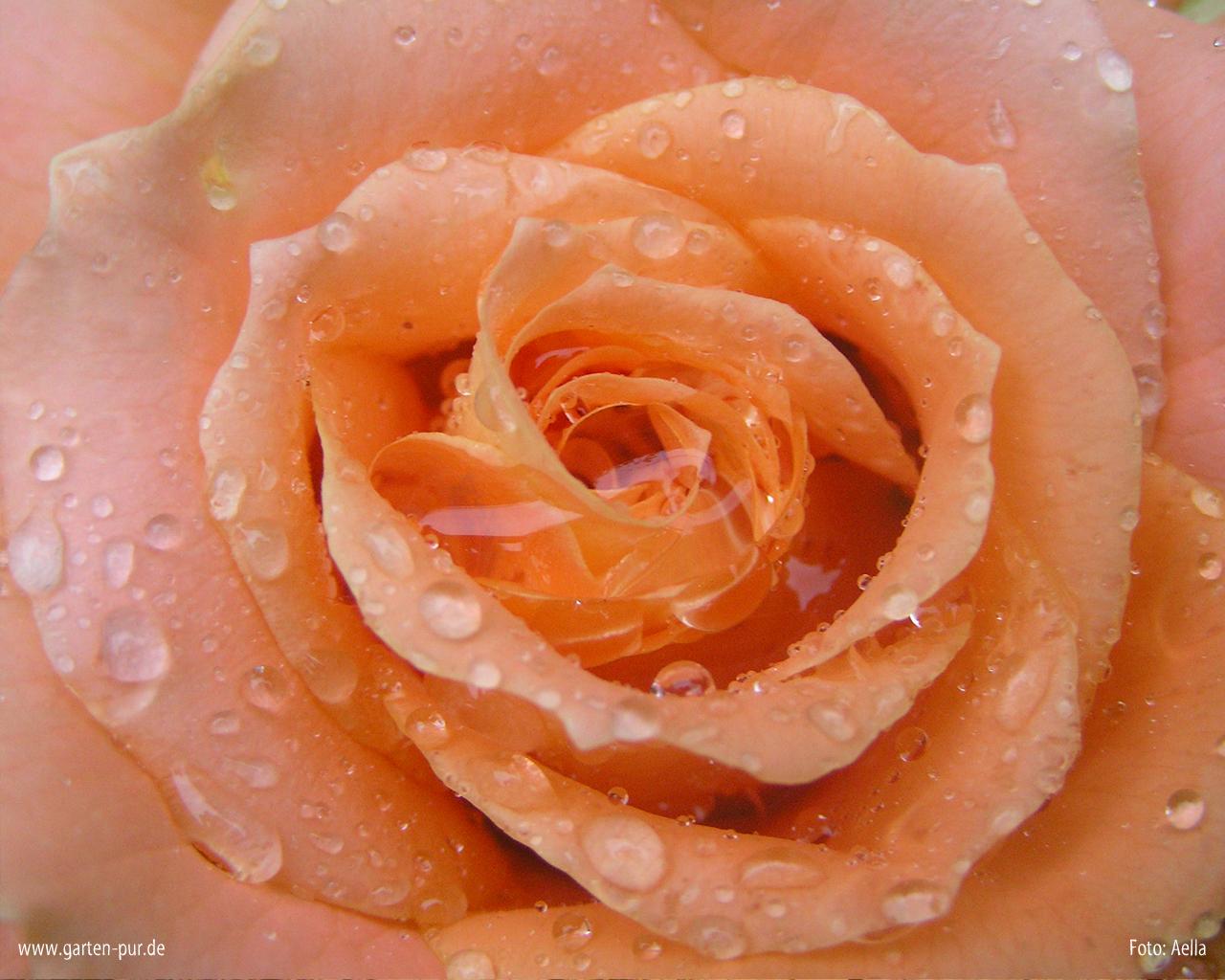 daphne rosen videos
